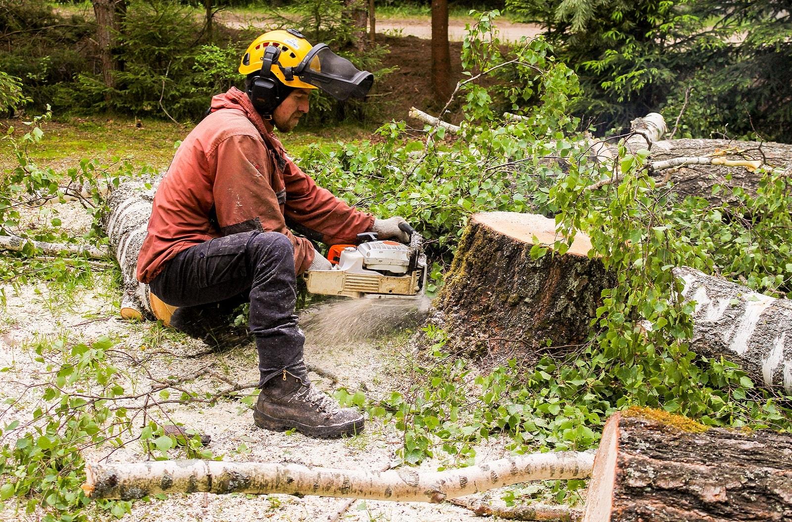 Bendigo Tree Removal